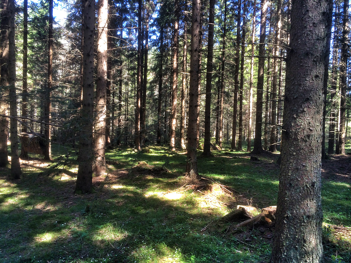 skog_1200x900